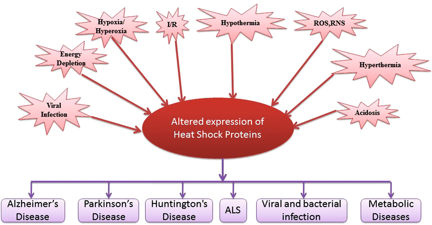 Role of Heat Shock Proteins in Oxidative Stress and Stress ...