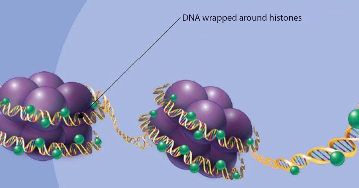 Histone Code: A Challenge to Evolution, an Inference to Design | Evolution News