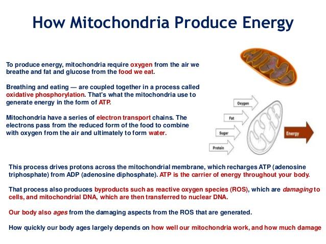 Mitochondrial biogenesis