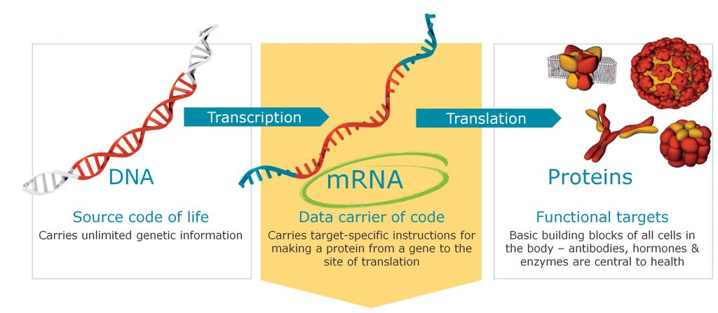 The Race Is On: What mRNA Product Will Reach the Market First?