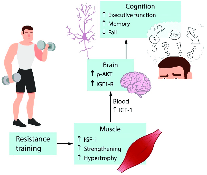 Effects of resistance exercise on cognition. Resistance training... | Download Scientific Diagram