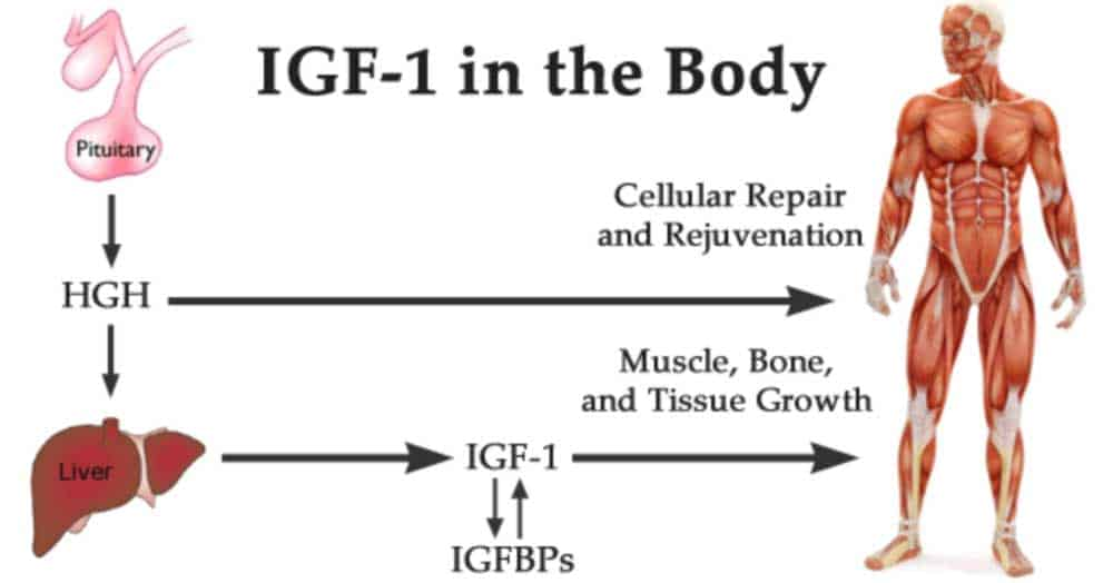 IGF-1 Vs HGH / Human Growth Hormone   HGH Bloj   Medical Health Institute