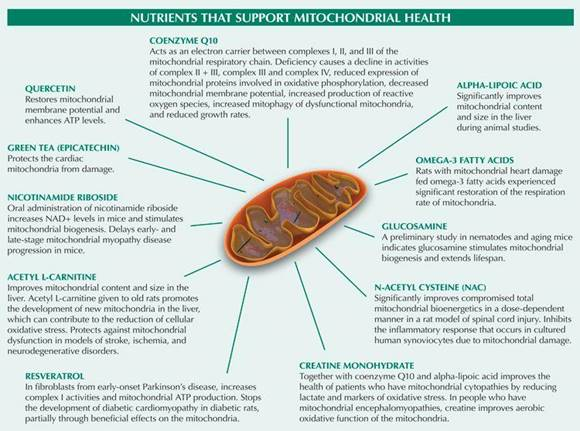 Mitochondrial Dysfunction and Chronic Disease - DrJockers.com |  Mitochondrial health, Mitochondrial disease, Mitochondrial disease awareness