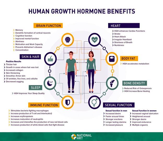 Benefits of human growth hormone | Growth hormone, Hormone supplements,  Hormones